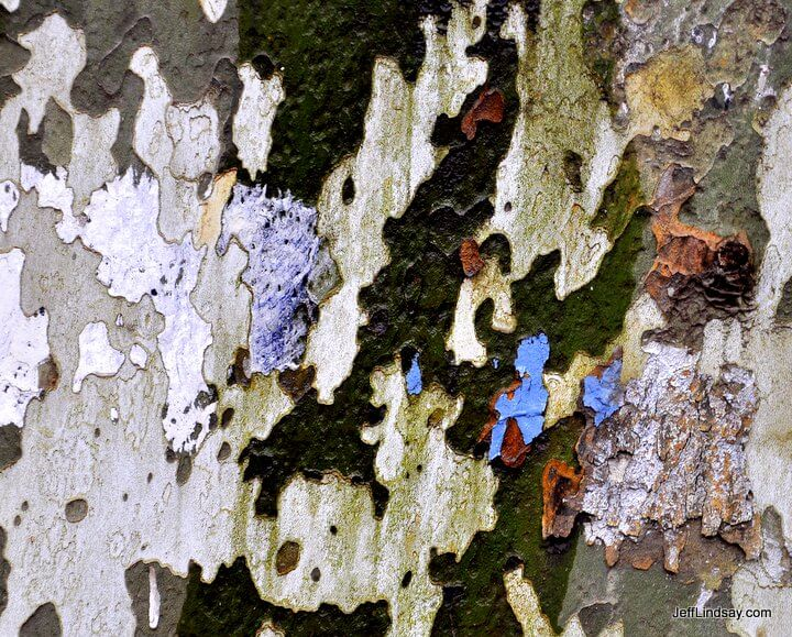 Bark and remnants of a poster on a plane tree in Nanjing.