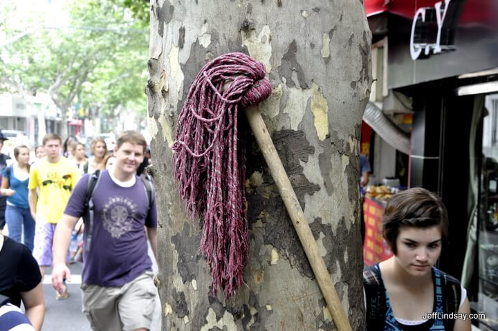 A tree and its mop