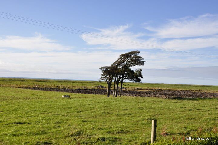 New Zealand: tree near Greymouth