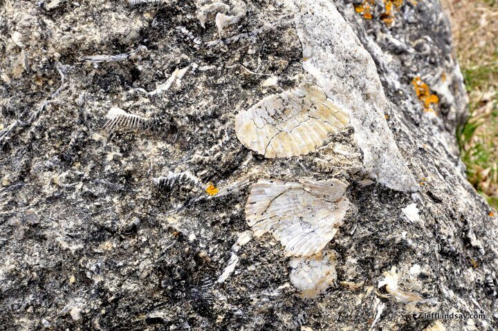 New Zealand: fossils