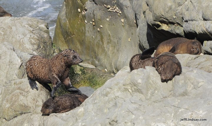 New Zealand: fur seal colony
