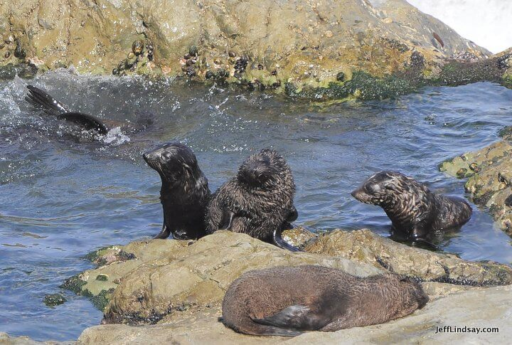 New Zealand: seal pool