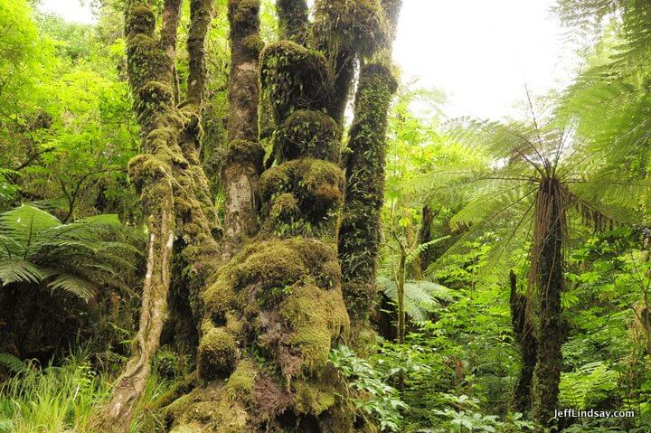 New Zealand: moss and trees